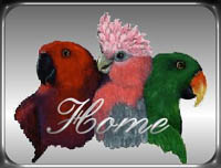 Back to Eclectusville.com